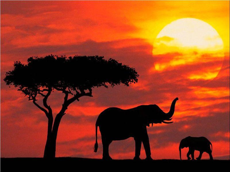 Kenya-nature